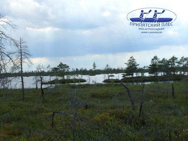 Экскурсия по болотам Полесья