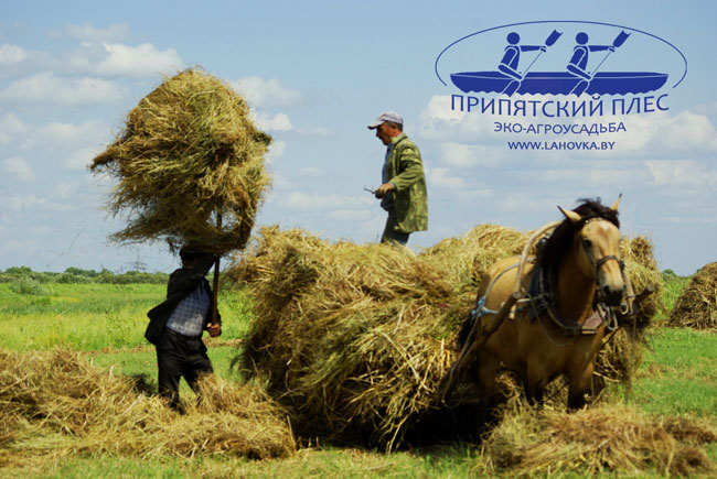 В деревне летом - сенокос
